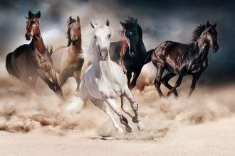 Skleněný obraz HORSE 120x80 cm
