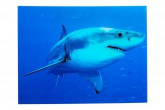 obraz skleněný SHARK 80-CM